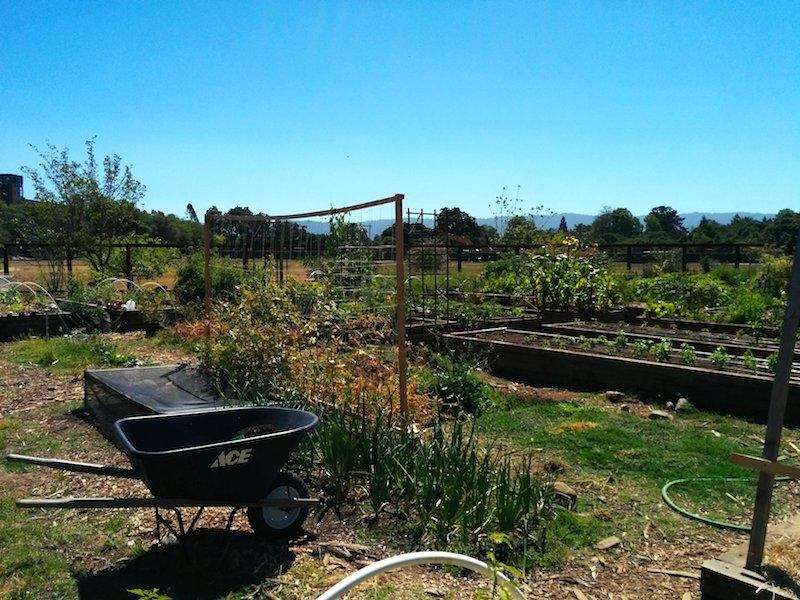 Stanford Community Garden
